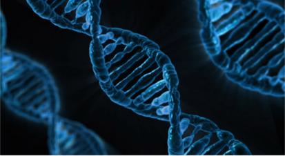 染色体について